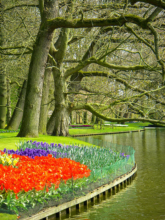 Moss Covered Trees And Spring Tulips In Keukenhof Gardens Near Lisse Netherlands Print by Robert Ford