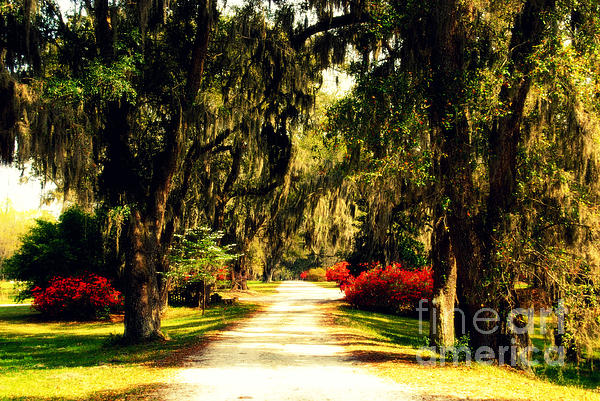 Moss On The Trees At Monks Corner In Charleston Print by Susanne Van Hulst