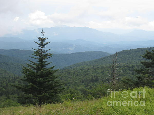 Mount Rogers National Scenic Area Print by Steve Gass