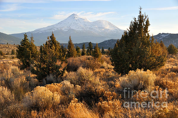Mount Shasta In The Fall  Print by Gary Whitton