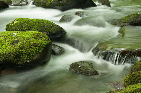 Mountain Stream Print by Phyllis Peterson