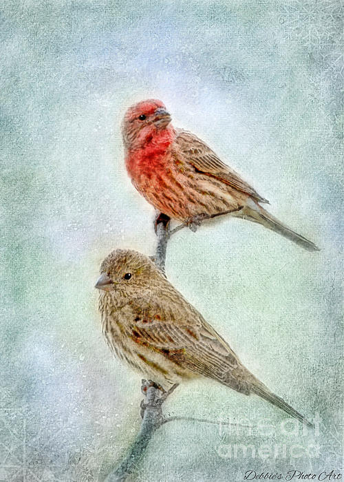 Mr And Mrs House Finch Digital Paint Print by Debbie Portwood