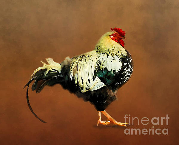 Darren Fisher - Mr Rooster