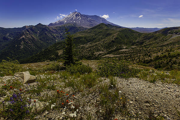 David Millenheft - Mt St Helen