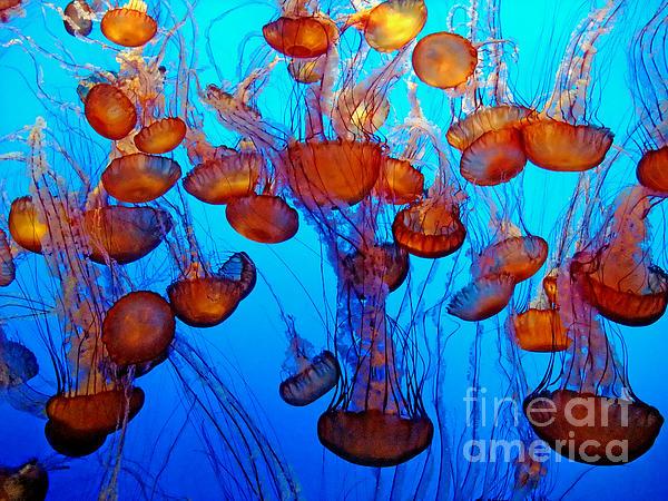 Multiple Jellyfish  Print by Jim Fitzpatrick