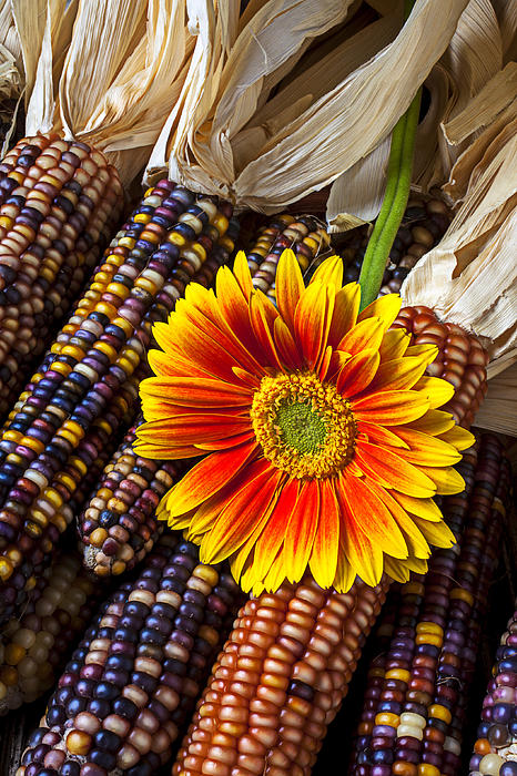 Mum And Indian Corn Print by Garry Gay