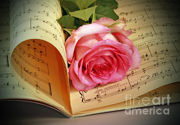 Musical Rose Print by Inspired Nature Photography By Shelley Myke