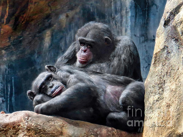 Jennie Breeze - Must Be Chimpanzee Love