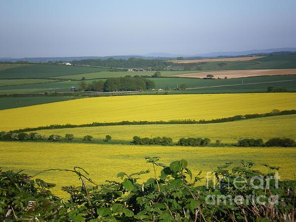 Mustard Colour Fields Print by Ann Fellows
