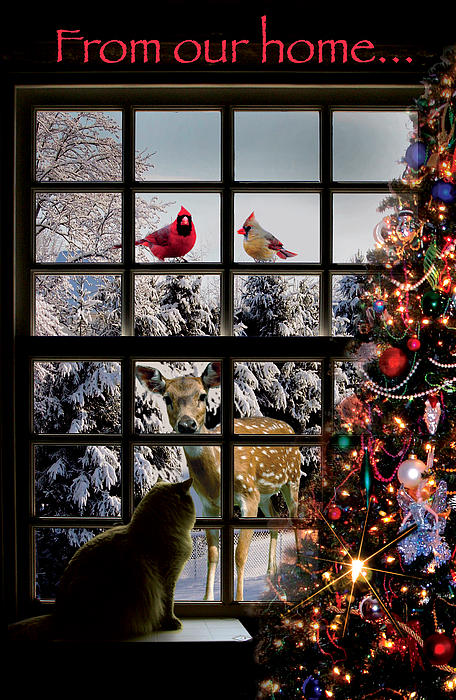Harold Shull - My Christmas card