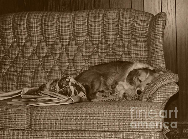 My Dog Sleeping On The Couch Circa 1976 Print by ImagesAsArt Photos And Graphics