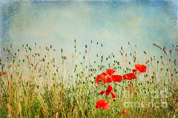 My Summer Dream Print by Angela Doelling AD DESIGN Photo and PhotoArt