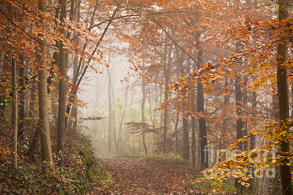 Mystic Woods Print by Anne Gilbert