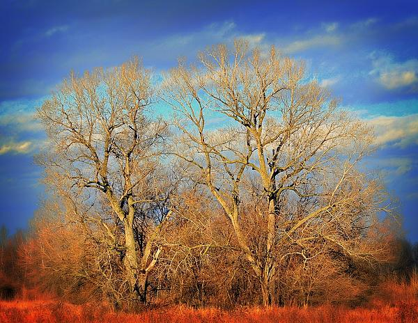 Naked Branches Print by Marty Koch