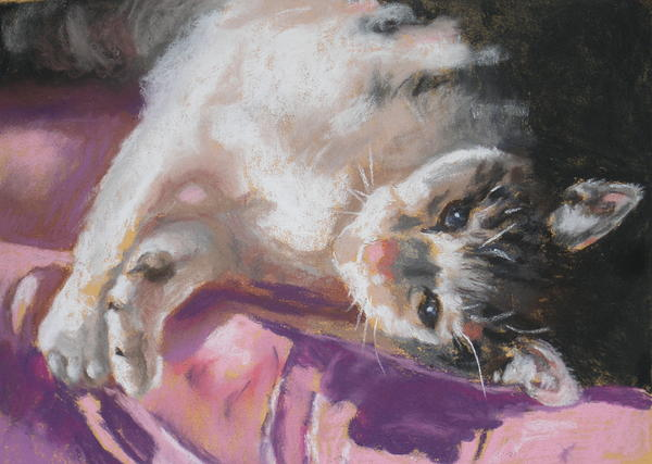 Nap Time For Kitty Print by Janice Harris