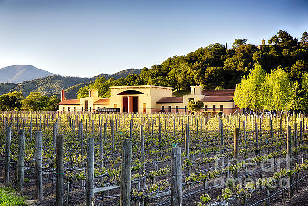 Napa Valley Spring Sunset Print by George Oze