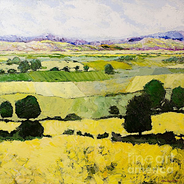 Napa Yellow2 Print by Allan P Friedlander