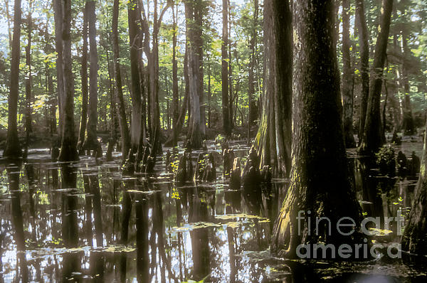 Natchez Trace Wetlands Print by Bob Phillips