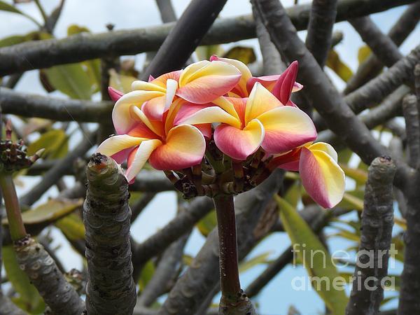 Natural Bouquet  Print by Mindy Sue Werth