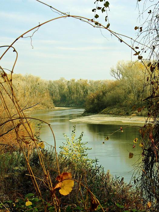 Pamela Patch - Natural Framing Sacramento River