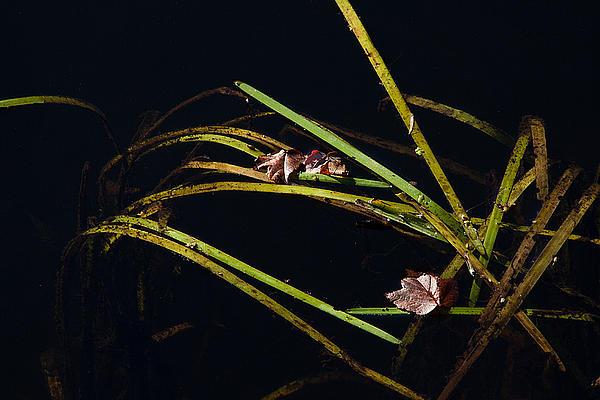 Nature Floats Print by Karol  Livote