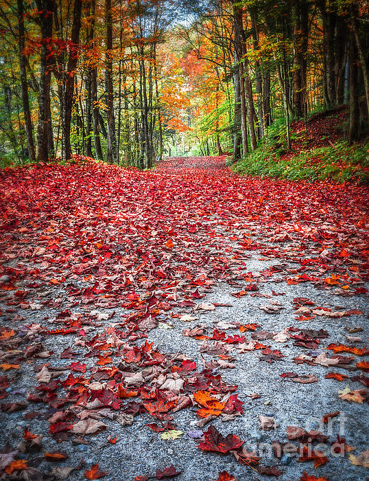 Nature's Red Carpet Print by Edward Fielding
