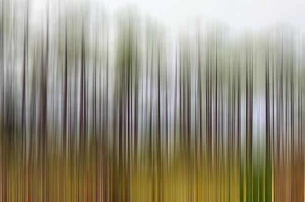 Nearly Spring Print by Jan Amiss Photography