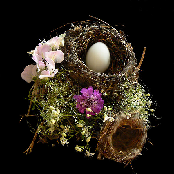 Barbara St Jean - Nest Egg