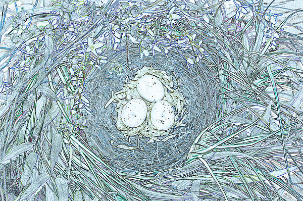 Nest Eggs By Jrr Print by First Star Art