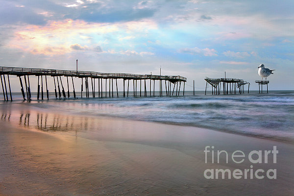 Nesting On Broken Dreams - Outer Banks Print by Dan Carmichael