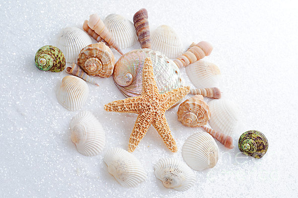 North Carolina Sea Shells Print by Andee Design