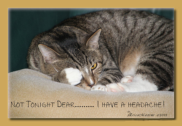 EricaMaxine  Price - Not Tonight Dear ...