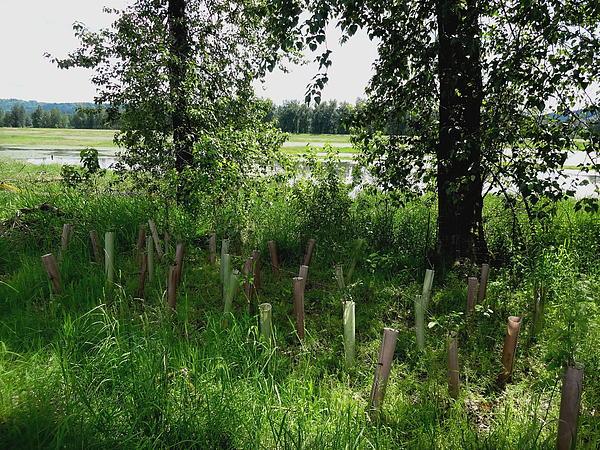 Nurturing Trees To Grow Print by Lizbeth Bostrom