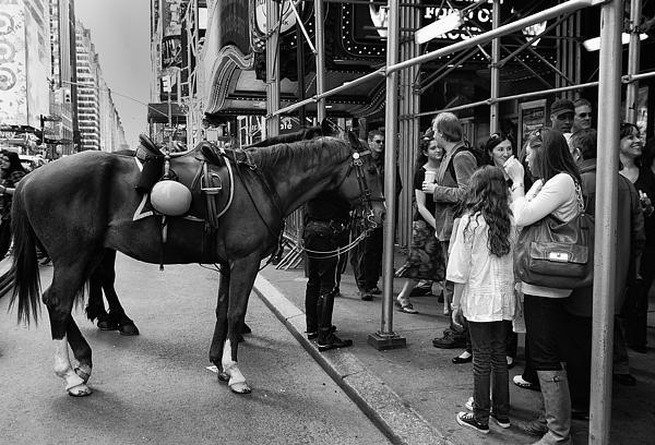 Nyc Police Horse Print by Mark Jordan