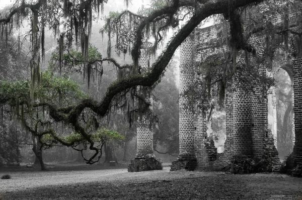 Scott Hansen - Oak Limb at Old Sheldon Church