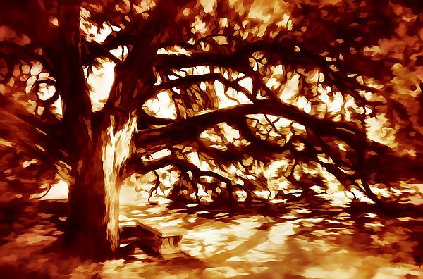 Oak Print by Scott Norris
