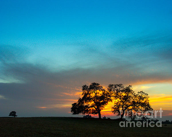 Oaks And Sunset 2 Print by Terry Garvin