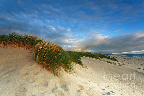 Reflective Moments  Photography and Digital Art Images - Ocean Front Property