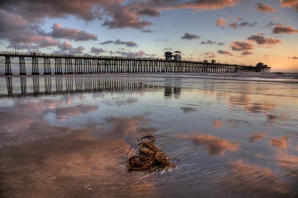 Oceanside Pier Seaweed Print by Peter Tellone