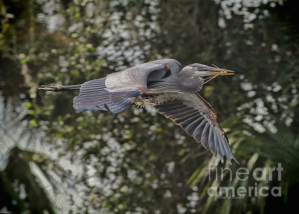 Off To The Nest 2012 Print by Deborah Benoit