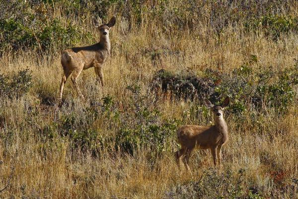 Oh Deer Print by Charles Warren