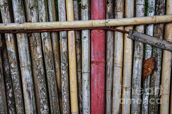 Old Bamboo Fence Print by Niphon Chanthana