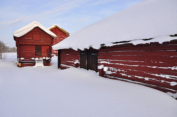 Old Barn Print by Conny Sjostrom