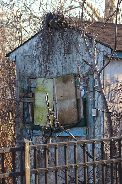 Old Blue Shack Print by Tom Gari Gallery-Three-Photography
