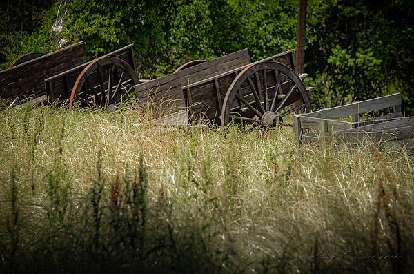 Old Cotton Bale Wagons Print by Allen Biedrzycki
