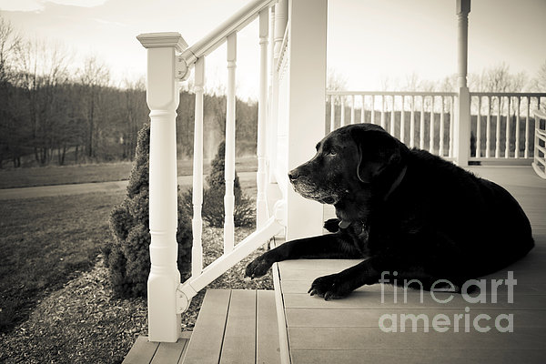 Old Dog On A Front Porch Print by Diane Diederich