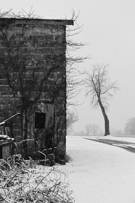 Old Door And Tree Print by William Jobes