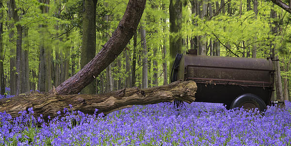 Old Farm Machinery In Vibrant Bluebell  Spring Forest Landscape Print by Matthew Gibson
