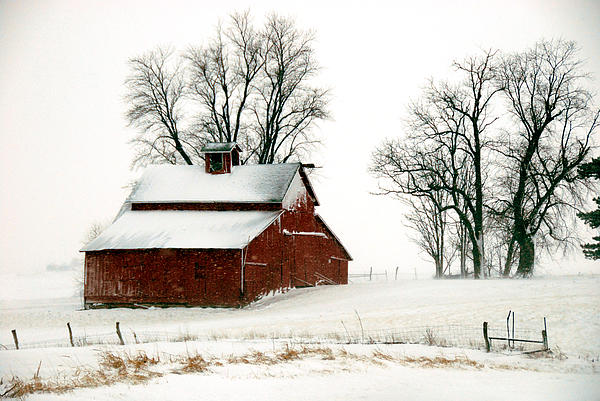Old Red Barn In An Illinois Snow Storm Print by Kimberleigh Ladd