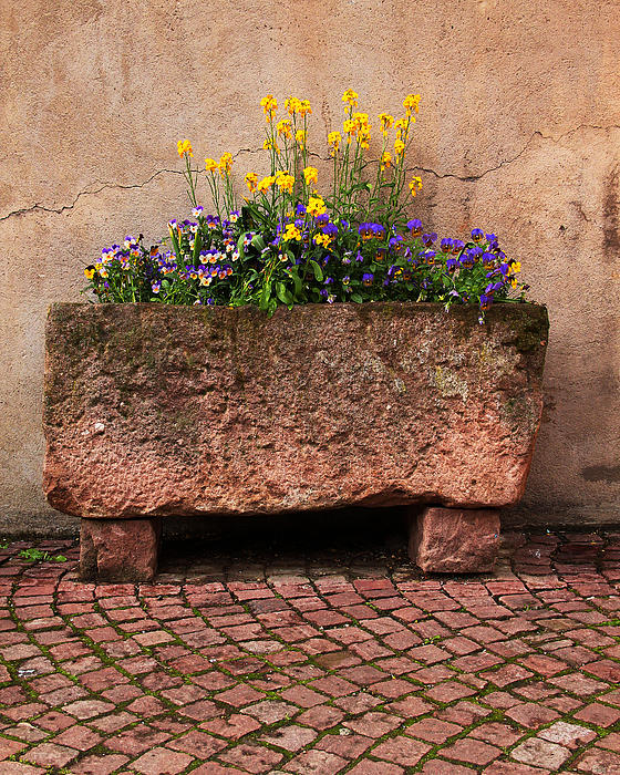 Old Stone Trough And Flowers In Alsace France Print by Greg Matchick